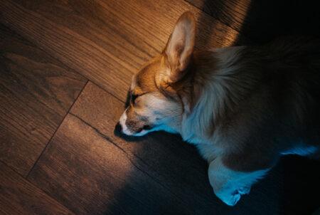 parquet antigraffio adatto animali e cani