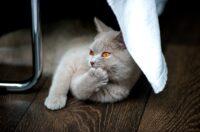parquet resistente antigraffio animali domestici